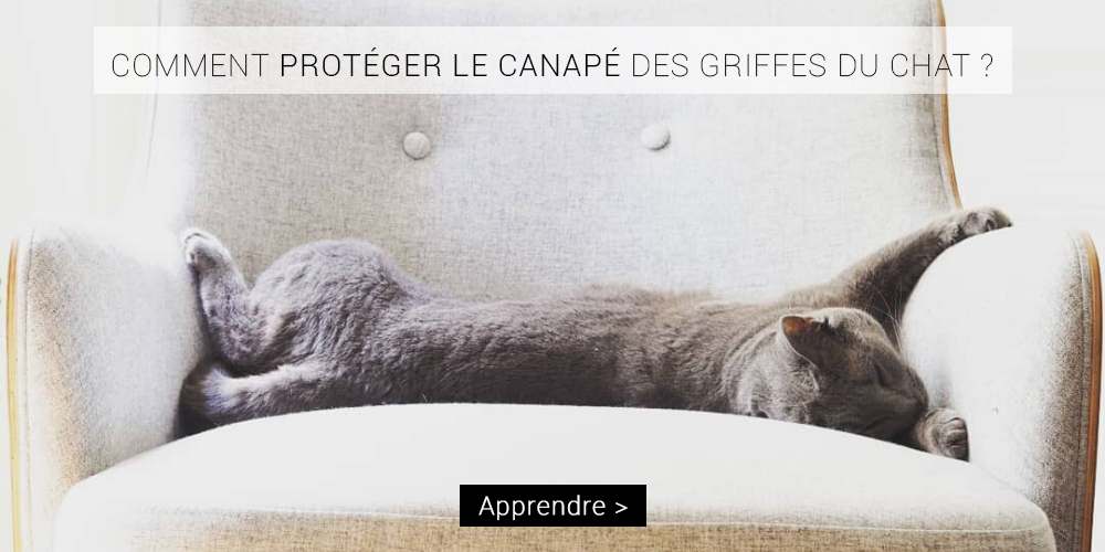 proteger-canape-griffes-chat